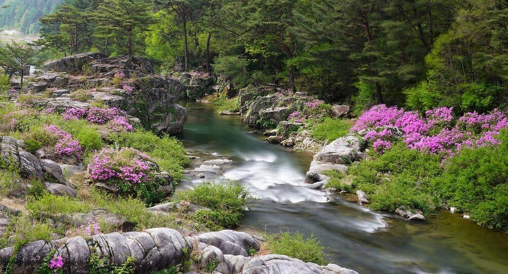 Arirang, il canto popolare coreano